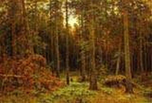 pine forest 1885 XX the russian museum st petersburg russia